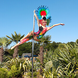 tropical bird aerial performer